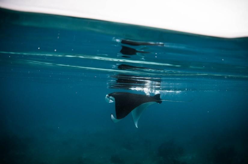 Maratua – Diving withTurtle