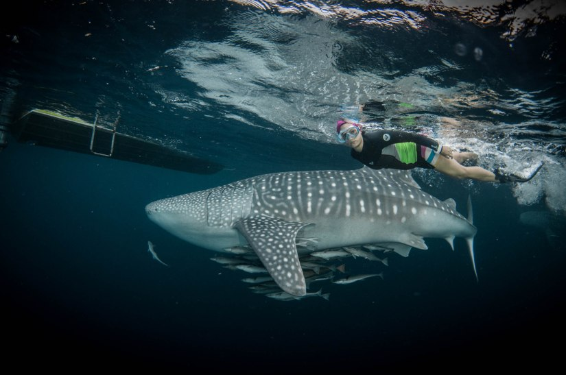 Diving with Whaleshark and Manta Ray at Derawan